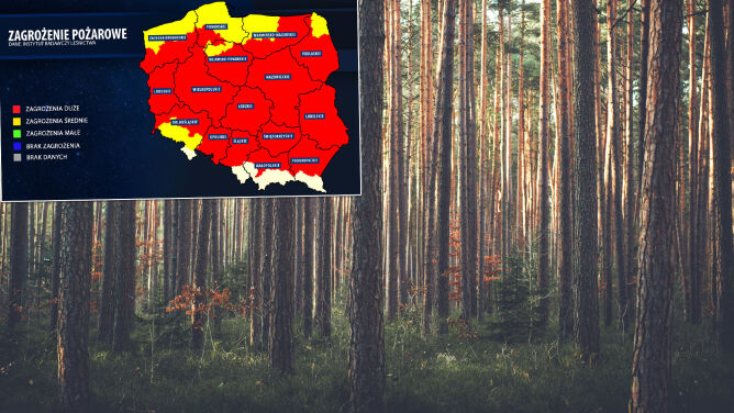 Najwyższy stopień zagrożenia pożarowego. Straż: uważajmy w lasach