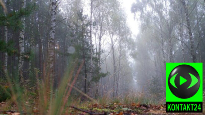Mgły, deszcz i rykowisko jeleni